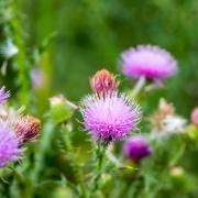 Пролетен детокс в 5 лесни стъпки